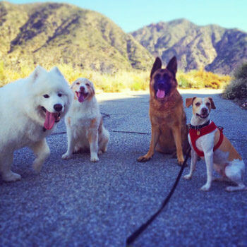 koa-sophie-akaisha-milo-posing-on-a-run-tiny
