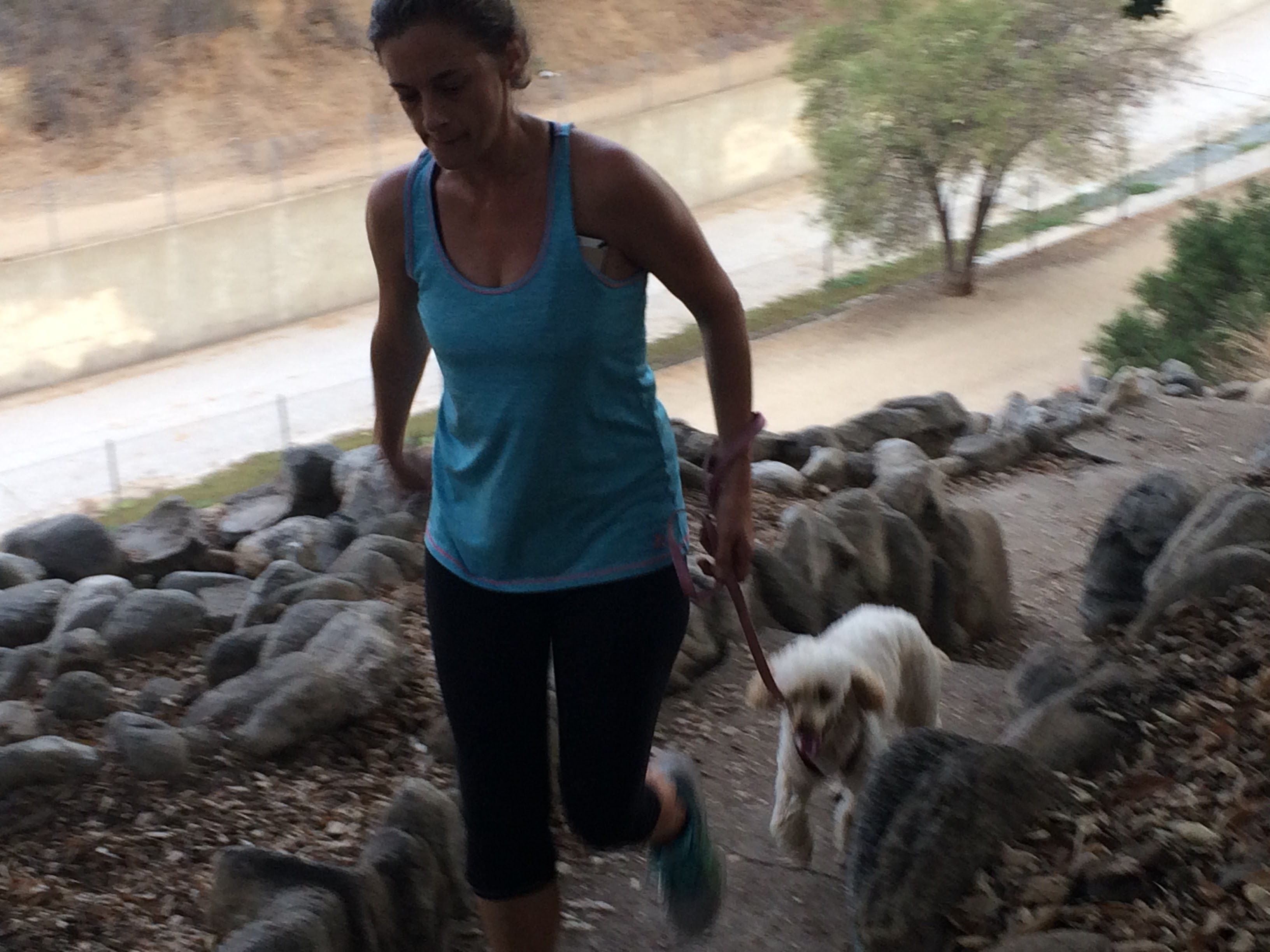 Dog Running, Dog Hikes, Dog Walks, and Pet Sitting for Los Angeles